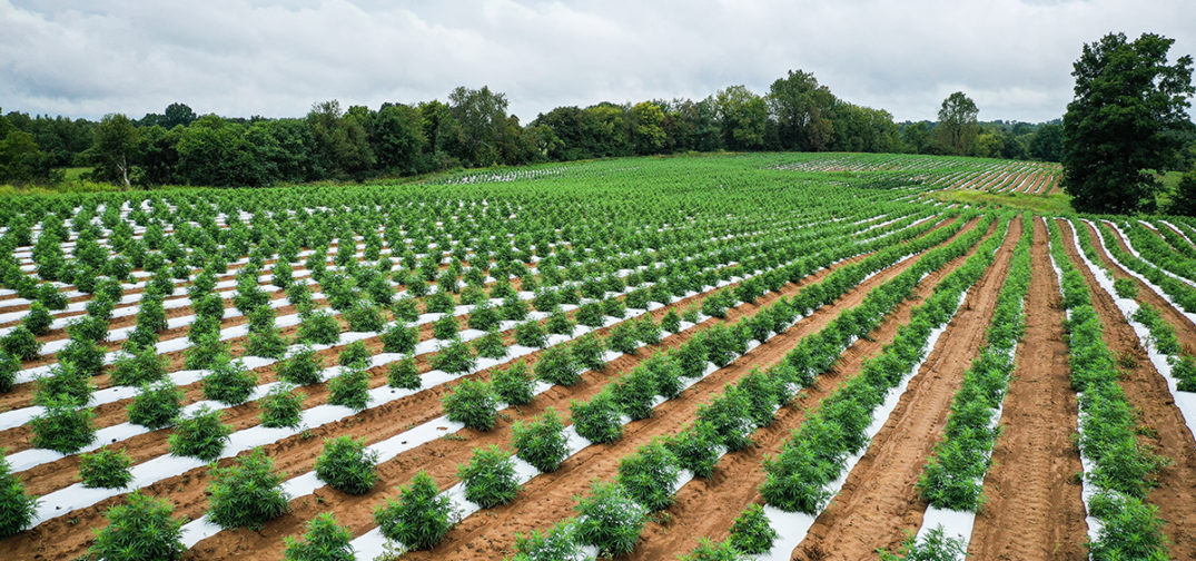 USDA Approves Hemp Plans for Massachusetts and Five Native Tribes